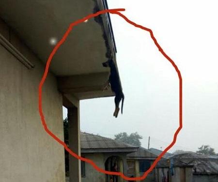 dog-hung