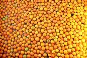 oranges-902788_640
